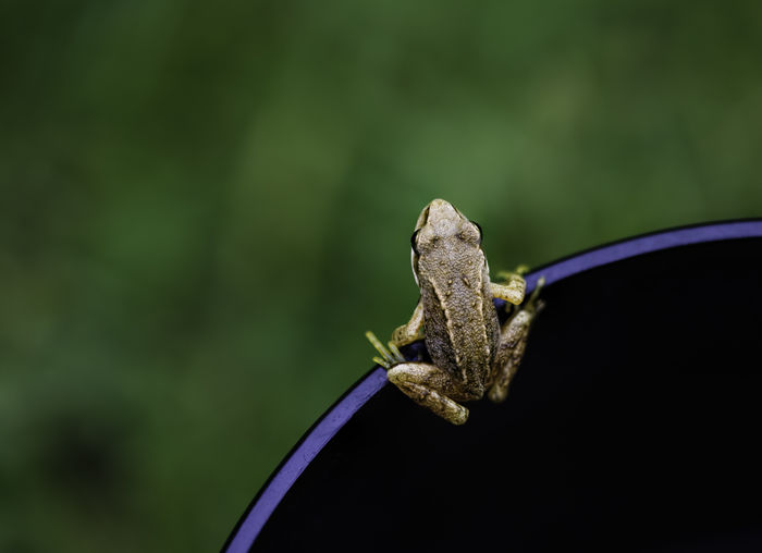 Close-up of frog on black canvas