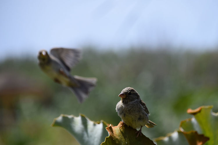 Close-up of bird perching on leaf against sky