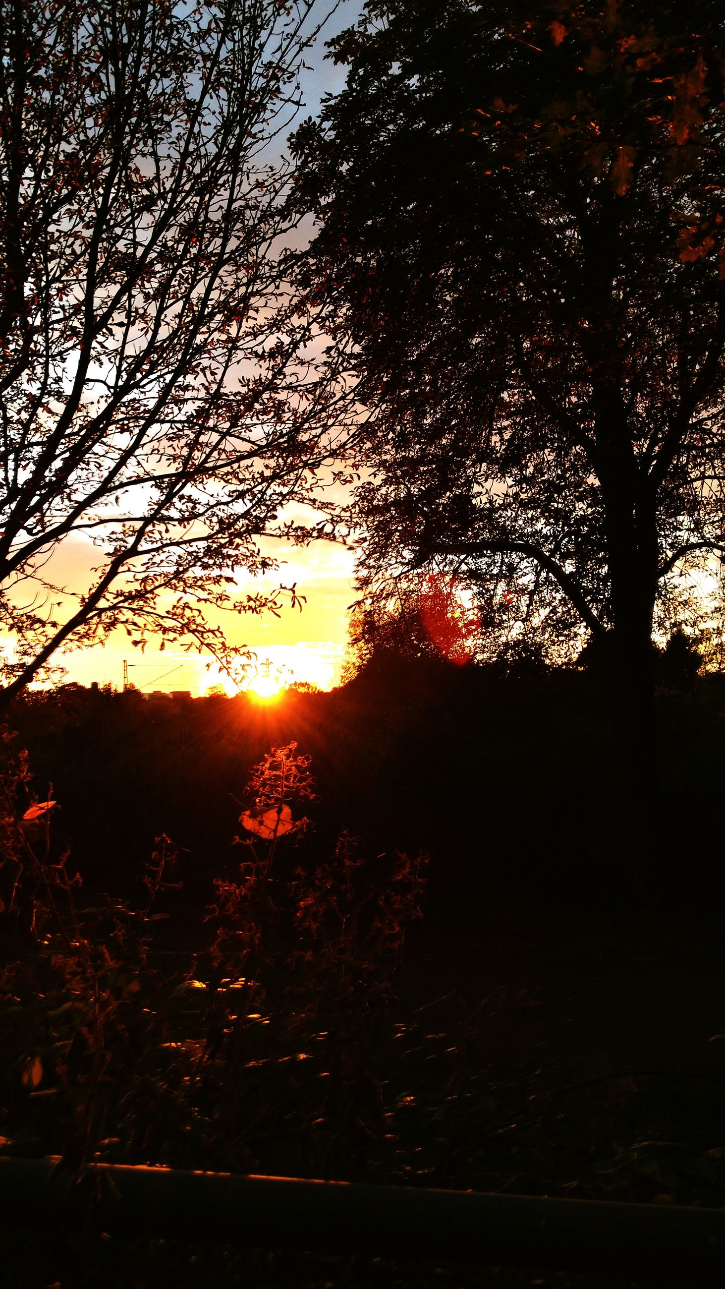 sunset, tree, nature, orange color, no people, sky, silhouette, outdoors, beauty in nature, scenics, close-up, day