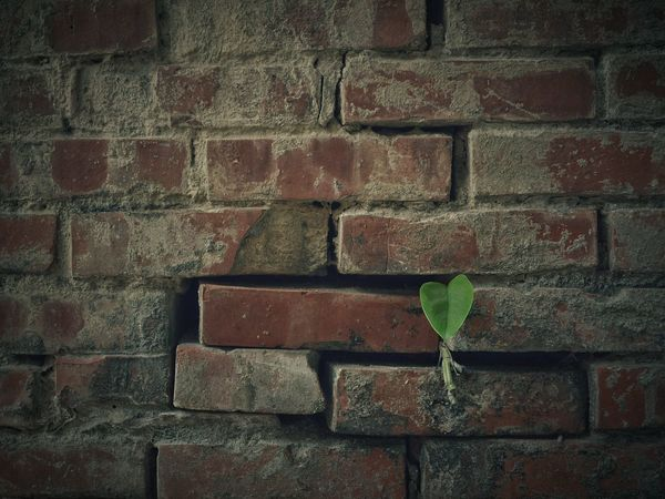 Old Town Alley Red Brick Wall Leaves Leaf Heart Heart ❤ 壁萌 Light And Shadow Simplicity Simple Photography Minimalism Minimal Minimalist Photography  No People From My Point Of View Nature PhotographyStreetphotography Street Photography Streetphoto_color Eye4photography  EyeEm Best Shots EyeEm Nature Lover 專)yuna's 鹿港記錄 in彰化 Taiwan