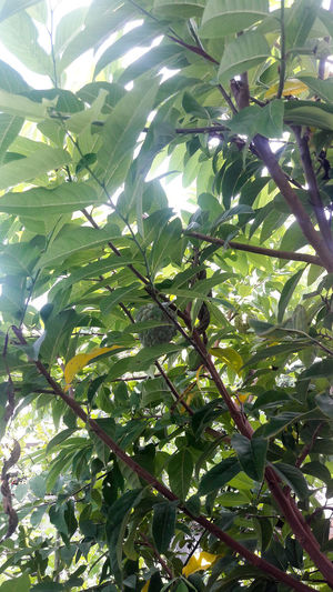 Abundance Backgrounds Beauty In Nature Day Food Freshness Fruit Full Frame Green Color Growth Healthy Eating Leaf Low Angle View Nature No People Outdoors Plant Supermarket Tree