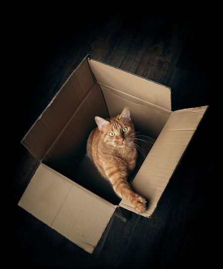 High angle portrait of cat in box on hardwood floor