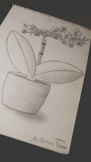 Drawing Flower Fashion Art
