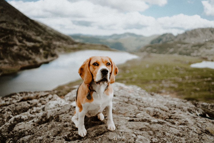 Dog standing on mountain against sky