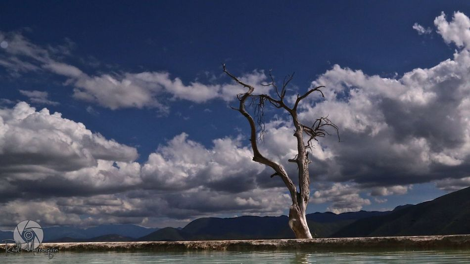 Hierve el agua Oaxaca. Sky Cloud - Sky Scenics Nature Outdoors Tranquil Scene Tranquility Day Beauty In Nature Tree No People Landscape Branch Dead Tree Bare Tree