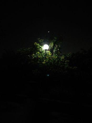 Night Tree Dark No People Illuminated Black Background Spooky Outdoors Moon Nature Sky Beauty In Nature Tree Area Astronomy