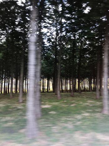 Cedar Forest Cedar Forest Gunma