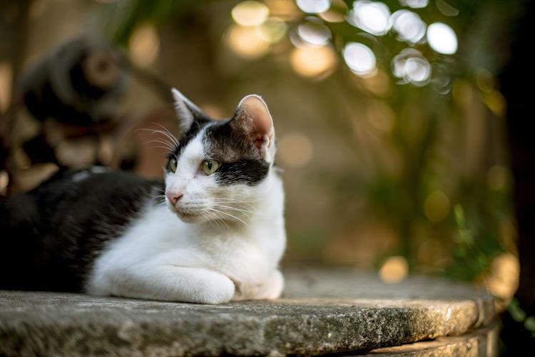Cat Resting On Concrete In Garden