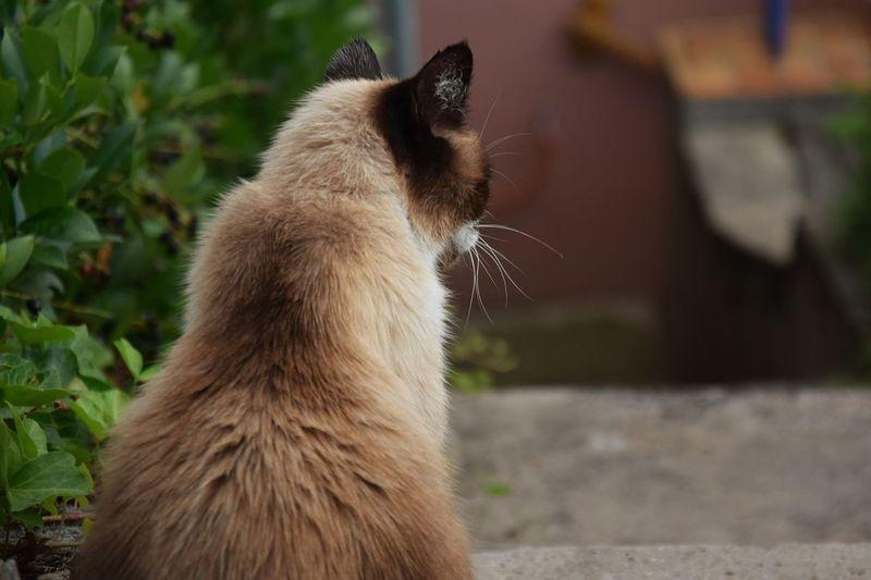 Cat Catoftheday Catlover Catsagram Catsofinstagram Cat Lovers Cateyes Caturday Cat Eyes Cats Of EyeEm Cat♡ Cats Animals Cat Photography Cats 🐱 Natural