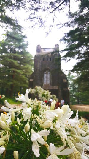 💒 Feel The Journey EyeEm Best Shots Church Nature EyeEm Gallery Gettyimages Dharamshala Dharamsala Dharamsala McLeod Ganj Moments Flowers Treescollection