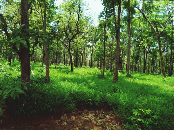 Tree Branch Lush - Description Lush Foliage Field Sky Grass Green Color Landscape