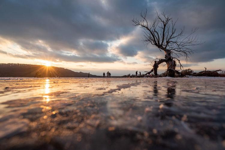 Bare trees on shore against sky during sunset