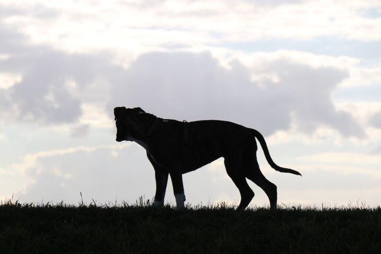 EyeEm Nature Lover Capture The Moment Juno's World Boxer Dog I Love My Dog