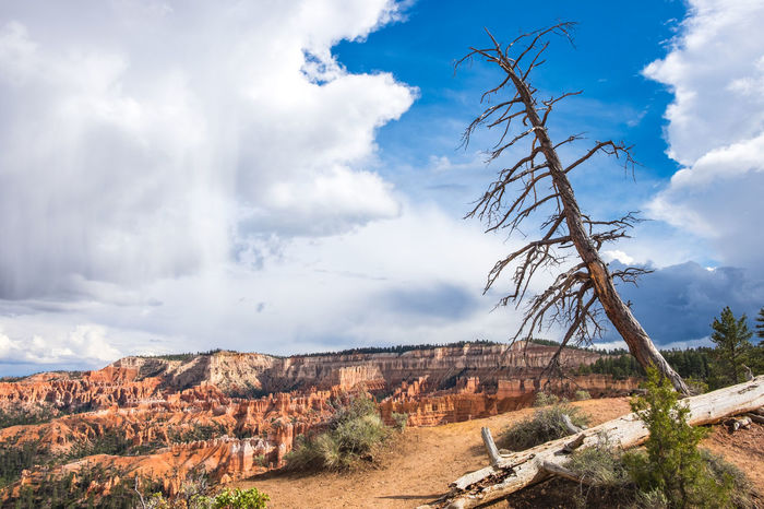 Bare Tree Beauty In Nature Blue Bryce Canyon Canyon Cloud - Sky Countryside Distant Dramatic Landscape Eroded Extreme Terrain Hoodoos Landscape Majestic Outdoors Physical Geography Red Rocks  Remote Rock - Object Rock Formation Scenics Solitude Tourism Travel Destinations Utah