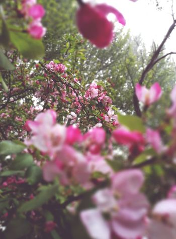 Nature Taking Photos Check This Out Enjoying Life Photography Huawei P9 Leica Nature's Filter Flowers Cherry Blossoms