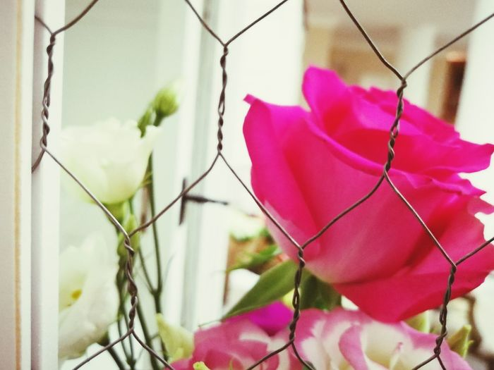 Pink Rose White Rose Roses Glamour Love Friendship Beauty Flower Arrangement EyeEm Selects Pink Color Flower Day Outdoors Close-up No People Growth Fragility Flower Head Freshness