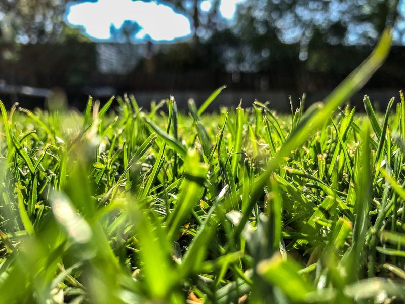 Grass Close-up Grass Backyard Garden Growth Green Color Plant No People Day Beauty In Nature Close-up Nature Freshness Blade Of Grass Selective Focus Wet Water Field Leaf Plant Part Tranquility Sunlight Outdoors Drop
