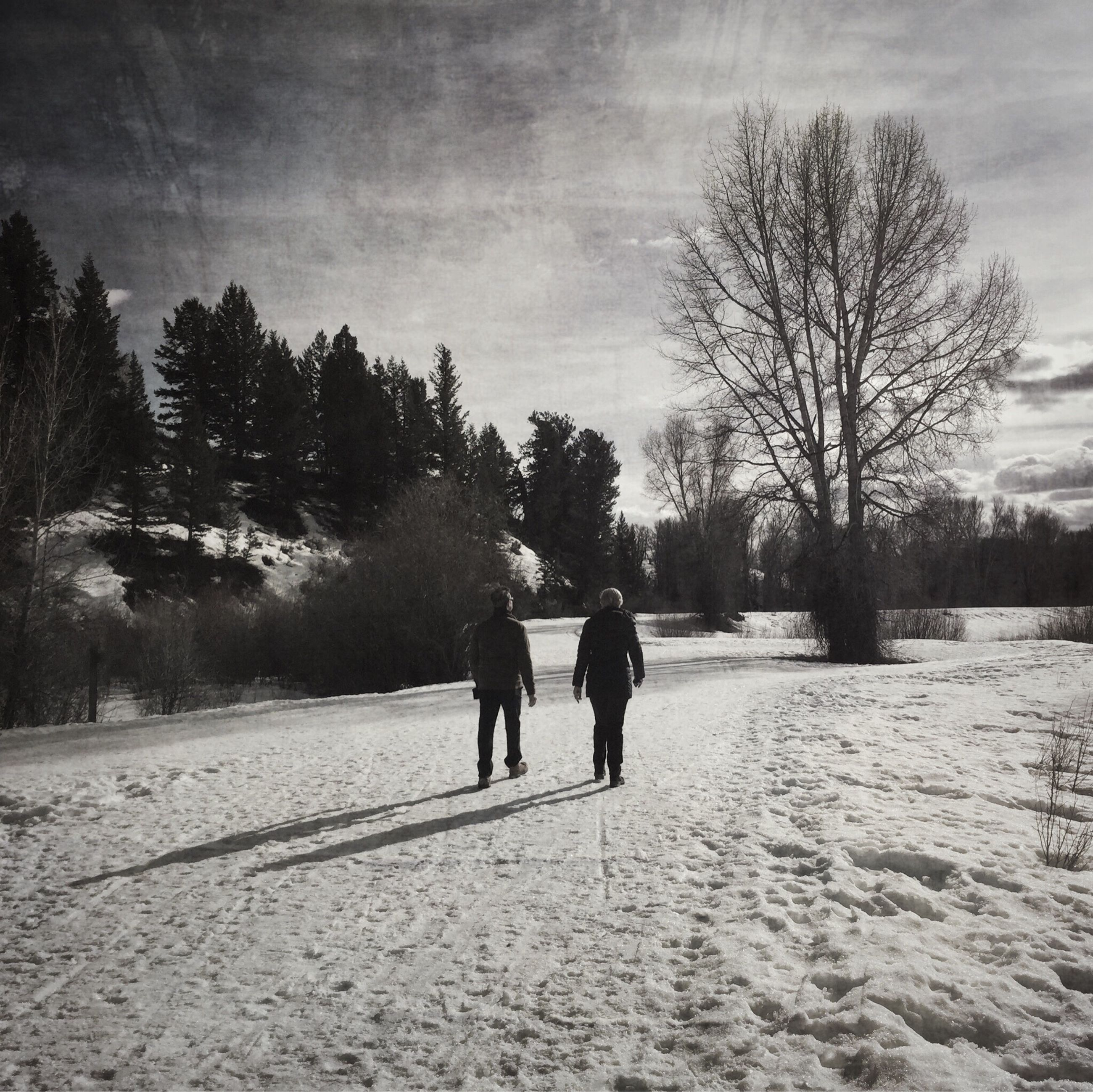 winter, cold temperature, snow, tree, season, rear view, walking, weather, bare tree, full length, men, lifestyles, sky, leisure activity, togetherness, the way forward, nature, person