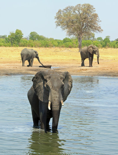 Animal Wildlife Animal Animals In The Wild Animal Themes Mammal No People Nature Outdoors National Park Africa Wildlife Animals In The Wild Beauty In Nature Elephant Group Of Animals Water Day Animal Family African Elephant Animal Trunk Hwange National Park Big Five
