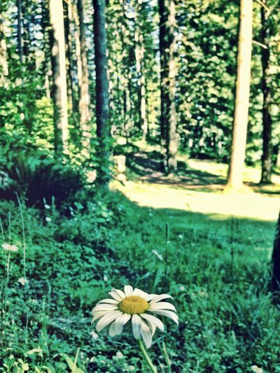 Flower Nature Daisey Camping