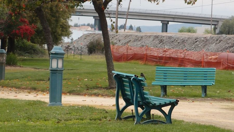Lonely park bench Beauty In Nature Built Structure Day Grass Nature No People Outdoors Sand Sky Tree