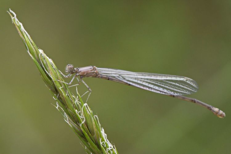 Ghostly Mayfly D5500 Animal Themes Animal Insect Animal Wildlife Invertebrate Animals In The Wild One Animal