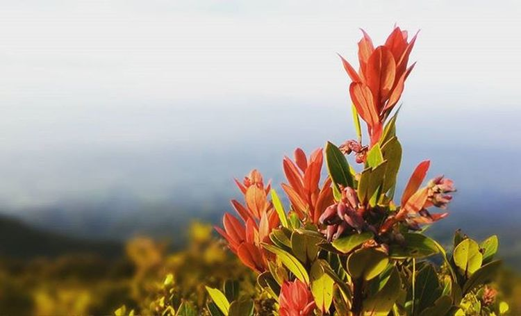 🌿🌷🌷🌿 Flower Flowers Nature Deepfield Landscape Mountains Instagood INDONESIA