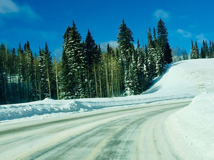 Snow Covered Pine Trees By Road Against Sky