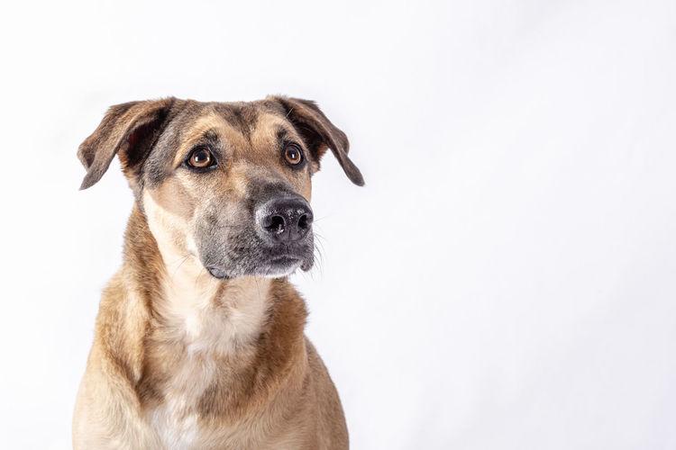 Portrait of dog against white background