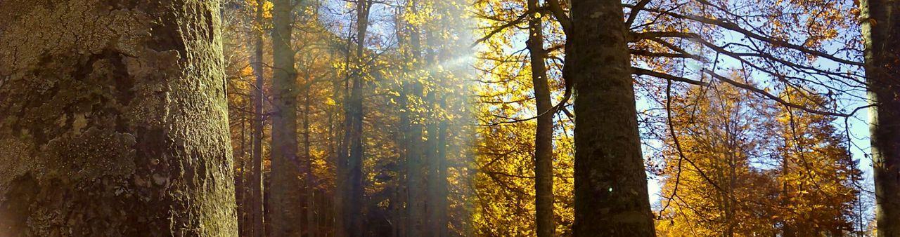 Trees Catalunya Beautiful Nature Landscape_Collection Nature_collection EyeEmbestshots Landscape Tree Catalonia Paisatges Catalans Enjoying NatureNatureEyeEm Best Shots - Landscape EyeEm Nature Lover EyeEm Best Shots