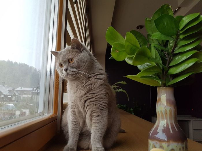 Live For The Story where are you summer Missing Summer ☀ Domestic Cat Pets Window Nostalgie