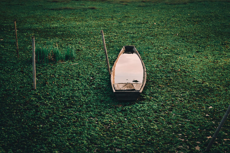 The boat was on the grass-covered water surface.