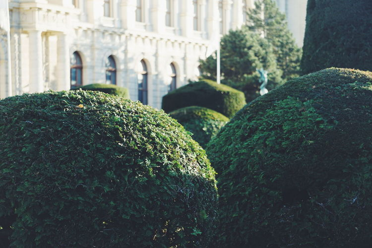 Topiary Against Building
