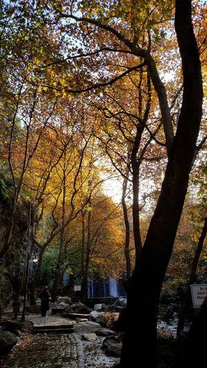 EyeEmNewHere Tree Branch Silhouette Sunlight Autumn Shadow Sky Landscape Streaming Sunset Woods Pathway Walkway The Great Outdoors - 2018 EyeEm Awards The Traveler - 2018 EyeEm Awards The Street Photographer - 2018 EyeEm Awards