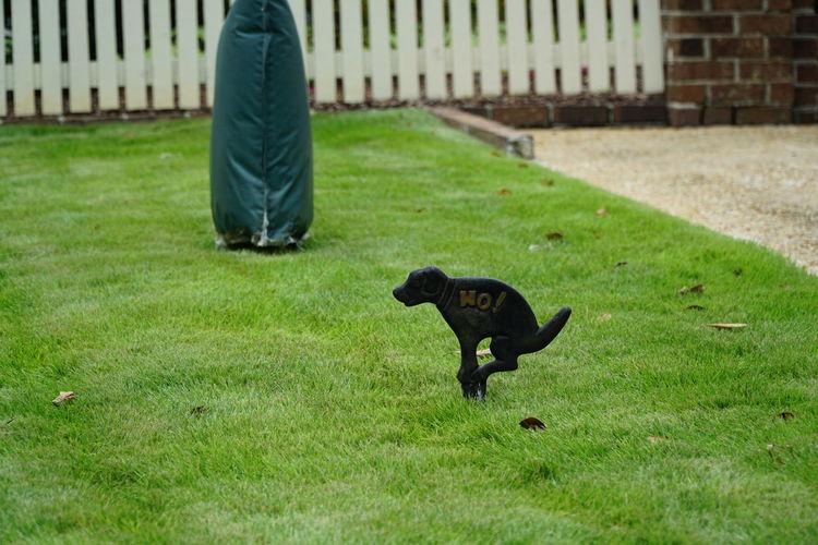 Green Hund Hundehaufen Dog Rasen