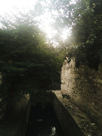 Hidden Gems  Mah Laqa Bai Tomb Tree The Way Forward Architecture Narrow Long Footpath Day Outdoors No People TranquilityHidden Gems In Hyderabad Hyderabad Tree Steps Solitude Tranquil Scene Ancient Well Wall Trees In Walls The Secret Spaces