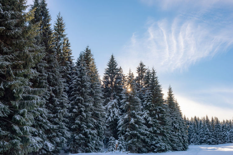 Tree Winter Plant Snow Cold Temperature Tranquility Tranquil Scene Beauty In Nature Nature Sky Scenics - Nature Pine Tree Coniferous Tree Forest Land No People Non-urban Scene Day Frozen WoodLand Evergreen Tree Outdoors Fir Tree Pine Woodland Snowcapped Mountain