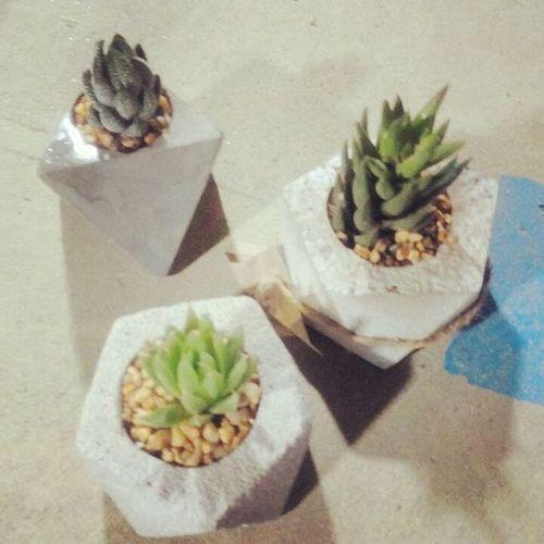 ใส่กระถางแล้ว...ดูดีทุกต้นdib_te กระถางปูนเปลือย กระถาง กระถางกระบองเพชร Cactusthailand Cactusmagazine Cactus Cacti Cactusclub Cactusclubcafe Gardening Gardens Gardeners Garden Design DIY Loft Rustic