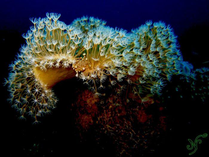 Coral By Motorola