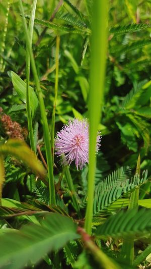 Flower Plant Nature Beauty In Nature Grass Outdoors Grassflowers