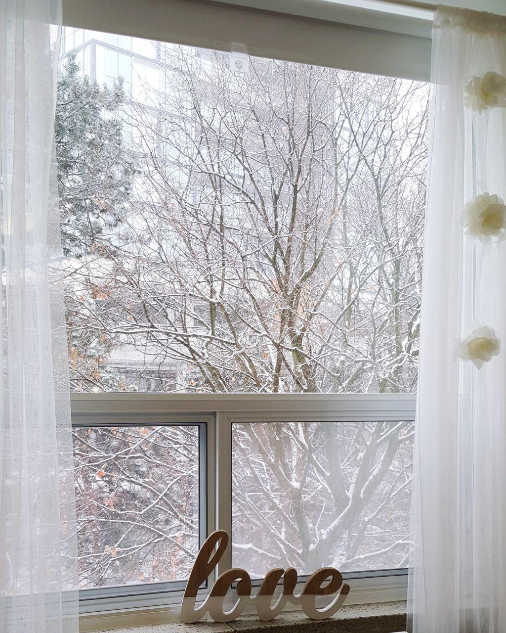 BARE TREES SEEN THROUGH WINDOW IN WINTER