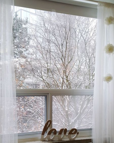 Bare tree in snow covered window