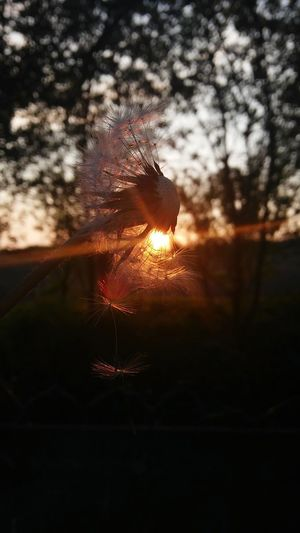 Big Sun ☀ In The Middle Of Nowhere Night Time Trees And Bushes Warm Day Warm Tone Good Weather ♥