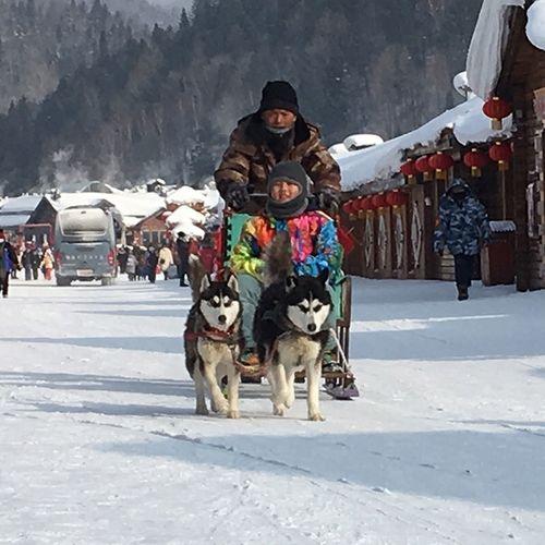 so cool ! Winter Snow Cold Temperature Mammal Domestic Animals Clothing Domestic