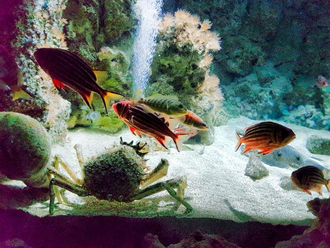 Sea Life Underwater Aquarium UnderSea Water Close-up Sea Life Fish Fun Summer Enjoyment Day Rhodes, Greece
