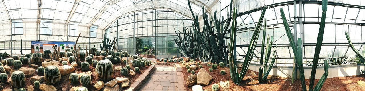 Garden Botany Cactus Cactus Flower Cactus Garden Cactus Collection Cacti Cactuslover Plant Park Nature Desert Desert Landscape Tree Indoor Vintage Lifestyles Summer Holiday Vacation Panorama Panoramic Photography Panoramic Photography Greenhouse Sky Architecture Built Structure Growing Glass - Material Blossom