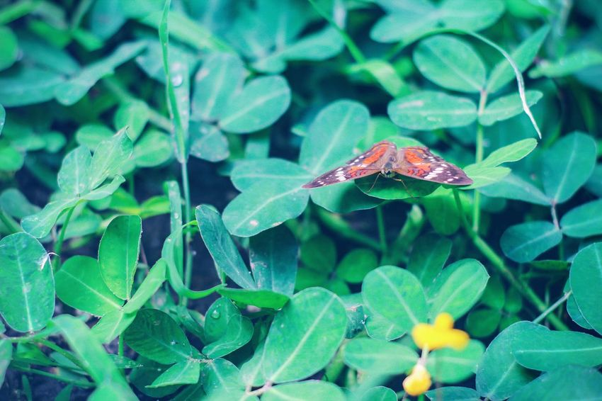Beauty In Nature Insect Plant Green Color Outdoors Tranquil Scene Naturelovers No People Nature_collection Tranquility Growth Nature One Animal