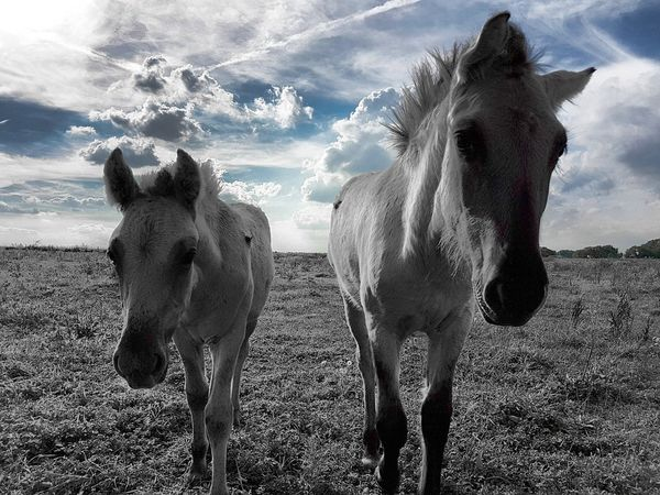Sky Animal Themes Nature Sunlight Domestic Animals Cloud - Sky Animals In The Wild Outdoors Pferdchen Horse Photography  Horsestagram Tiere♡ Black And White Photography Backgrounds EyeEm Masterclass Eye Em Nature Lover EyeEm Gallery Eyeemphotography Eyemphotography Eyem Gallery Blackandwhite Photography Black Background EyeEm Best Shots - Landscape Ponny Sunlight