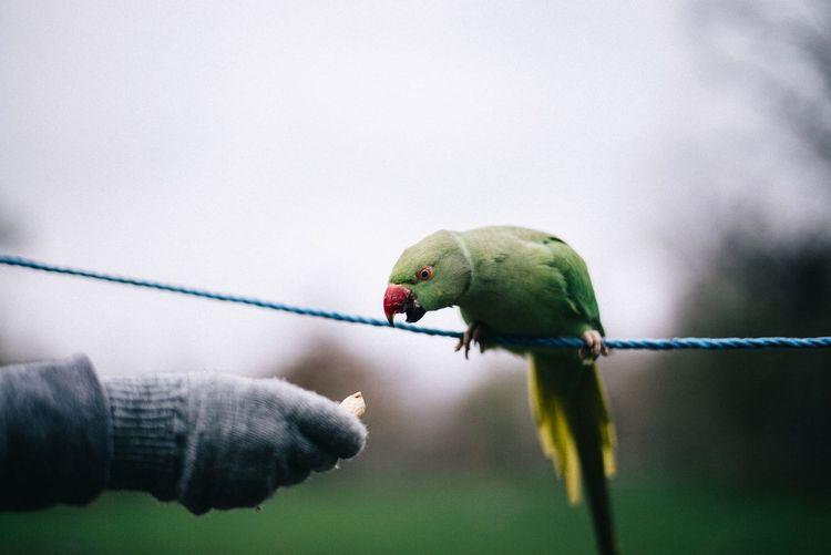 Person feeding parrot