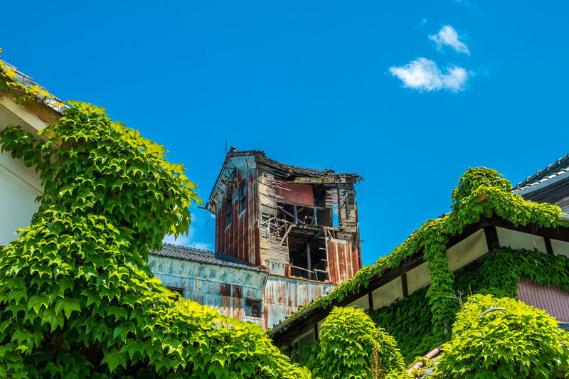 Low angle view of ivy growing on building against sky